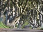 Dark Hedges site for the Games of Thrones