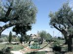 A hammok between two centenary olive trees in italy's 'new tuscany': a perfect place to relax!