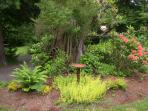 rhododendron/succulent garden