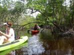 Kayaking fresh water lagoons or around the cays