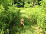 Dog Heaven! Wilson loves the grassy path through the meadow and woods to the pond. Bring your pooch!