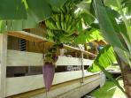 terrasse Bois d'Inde