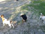 3 of our 5 Jack  watch  dogs