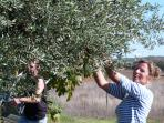 a lot of old olive trees on our unforgettable place in Portugal