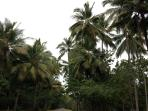 Take a stroll along the leafy coconut palm lined Esplanande