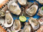 OYSTERS/ OSTRAS