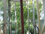 View from master bedroom into the top of the Chinese Tree of Heaven