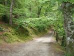 Dans les sous bois autour de l'étang du Ter, joli parcours pédestre