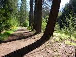 Take a nature walk!!