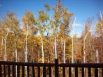 Fall Foilage from Deck