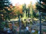 Beaver Pond in the Fall
