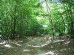 One of the paths through the extensive beech forests on the top of the Madonie mountains