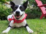 Sophie, our playful tail-waggin' pooch! Loves making new friends and tummy rubs!