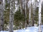 Woods behind cottage - Winter 2014