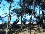 the pine forest of ''Pekias'' accross the sea-ideal for walks or swimming
