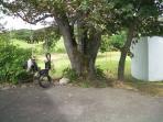 Tree swings in large garden
