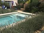 Pool surrounded by lavender