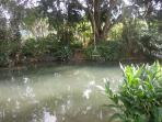 natural spring water swim hole 8 mins away from the bungalows