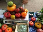 Short Walk to KK's Farm and Her Amazing, Biodynamic, Heirloom Tomatos