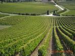 St.Emilion, one of it's many vineyards.