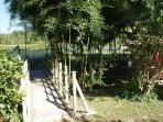 ponticello bambù
