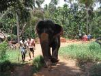 An excursion to a Goan spice farm can give you the thrill of an elephant ride