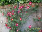 garden flowers - fiori del giardino