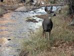 Deer in the river are visible from the porch