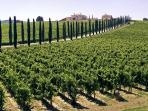 Città del vino e dell'olio d'oliva