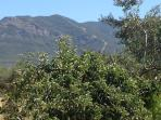 Finca Mountain Views, Alhaurin el Grande, Inland Costa Del Sol