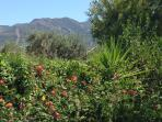 Finca Mountain Views Thru Trees & Gardens, Alhaurin el Grande