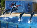 Parque aquático AQUOPOLIS a 7 minutos a pie