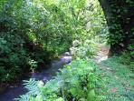 Explore 99 acres of creeks and pristine Forest Reserve with well maintained grass covered Trails