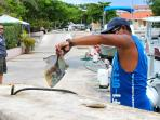 Casa Mayo. Fresh Fish caught at the marina