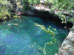 Cenotes are just across the road 307