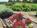 Finca garden area.