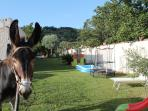 Our donkey Peppino