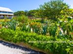 Vegetable and Cut Flower Garden, Guests Invited to Partake
