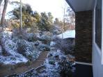 Carrington Treetops in snow