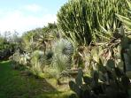 aiuole con cactus