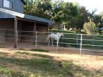 Attached horse stable + turnout is available for guest horses for an extra fee