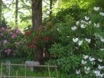 Spring rhoadies