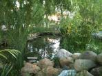 Beautiful pond with turtles and fishes