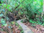 Walk thru El Yunque Rainforest just 10 minutes away.