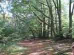 The beautiful Blackdown Hills, great for walking and moutain biking.