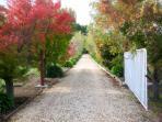 Tree-line entrance
