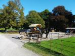 Jaunting Cars at Muckross House