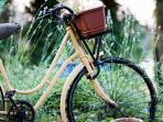 Bike amongst lavenders