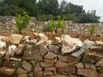 Traditional vineyard look