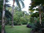 Fantastic tropical garden